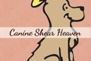 Ashevilles Best Dog Groomer