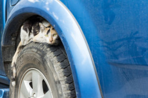 Cat Safety in Winter