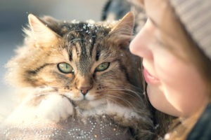 How to Keep pets Safe in winter months
