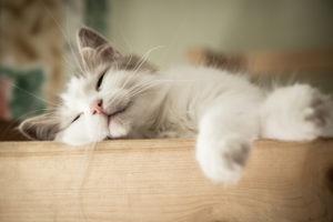 Cat Sitter Asheville NC