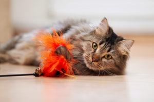 Cat Sitter Pet Sitter Asheville NC