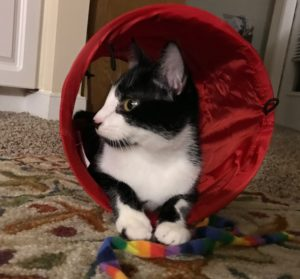 Cat Sitter Asheville