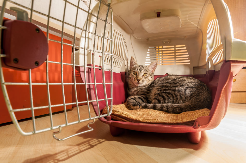 Carrier Training your Cat