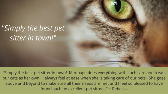 Best pet sitter in town for Quote slider