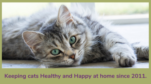 Keeping Cats Healthy banner